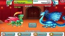 Noël ville bon dans prix tournoi tournois 2 Dragon Dragon