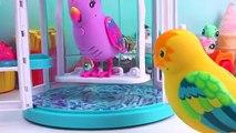 Belleza aves jaula de Fresco poco vivir amor mascotas juego canción hablando Bella sinying charlie r