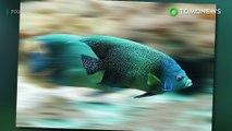 Ukuran ikan menyusut karena perubahan iklim - TomoNews
