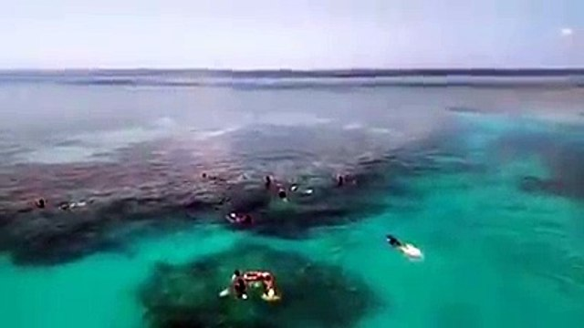 Great Barrier Reef 3 Day Tour | Great Barrier Reef Day Tours | Great Barrier Reef Tour