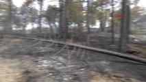 Bolu'da 2 Gün Süren Orman Yangınında 100 Hektar Kül Oldu-2