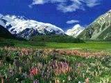 Faune, flore et paysage