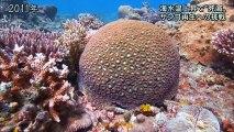 サンゴ礁再生20170905houdoustatoin