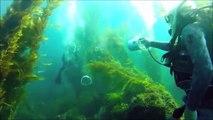 Ce plongeur a inventé un pistolet sous-marin à air comprimé pour faire des batailles façon airsoft
