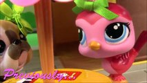 Bébé partie animal de compagnie Plan de séries Boutique douche douche vidéo Lps maman littlest 65 cookieswirlc