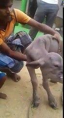 Mais p***** c'est quoi cet animal ! Le village est sous le choc !