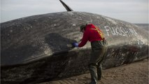 Northern Lights Stranding Whales?