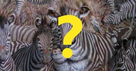 TEST LIČNOSTI: Životinja koju ste prvu ugledali - Zebra