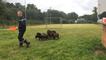 C'est l'heure du goûter pour les moutons du centre de secours !