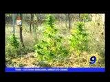 TRANI | Coltivava marijuana, arrestato 30enne