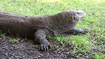 Dans Indonésie nationale parc Bromo-Tengger-Semeru ultra hd 4k