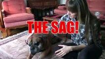 Big Barker Dog Beds vs Saggy Dog Beds