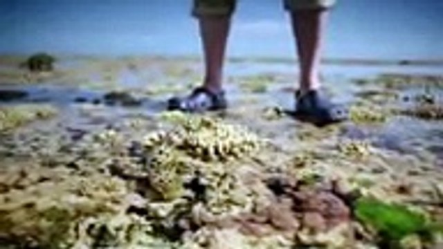 David Attenborough Documentary - BBC Great Barrier Reef - 3-3 FULL HD ,Tv series 2018 movies action comedy Fullhd season  part 1/2