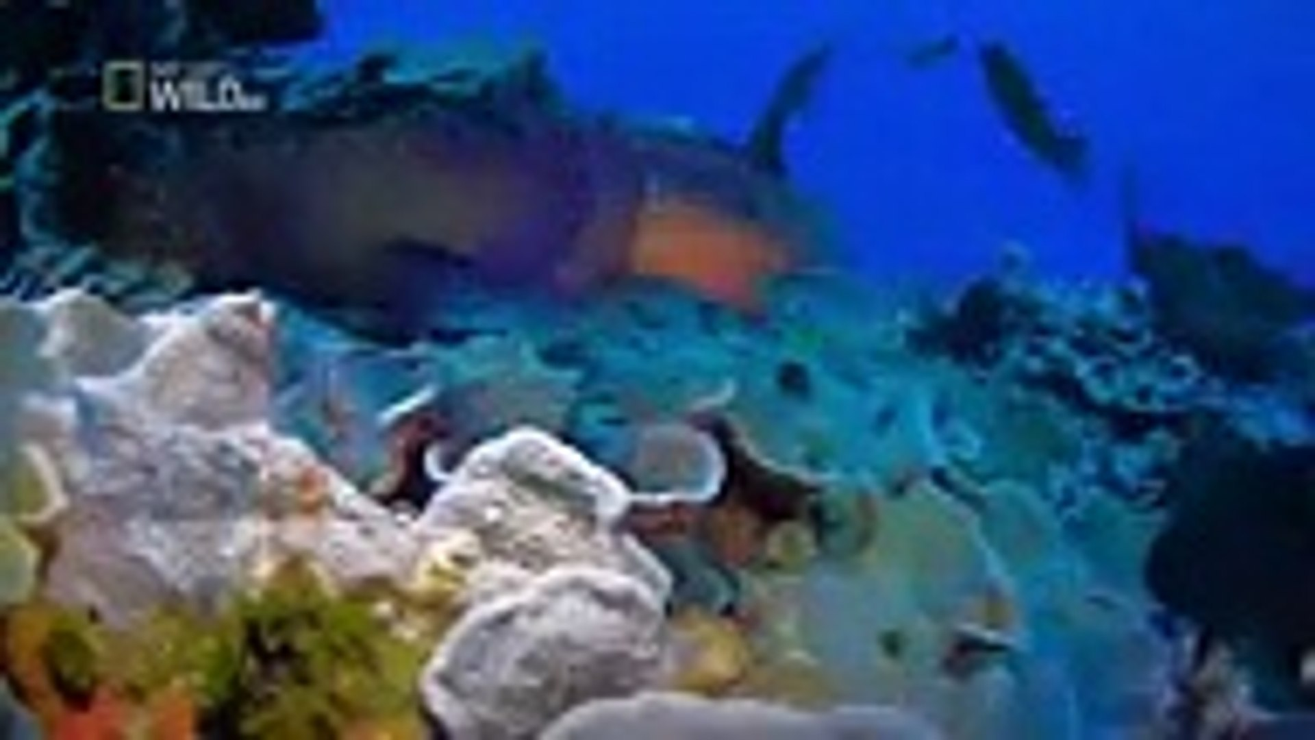 Ocean animals documentaries 2016 - animal planet HD - wild animals ,Tv series 2018 movies action com