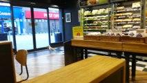 Une mouette vole un paquet de chips dans un magasin...