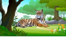 Wild Safari Animals,Nocturnal,Desert,Water Zoo Animals-Learn Names and Sounds-Kids Z Fun