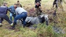 Hyon: sauvetage d'un cheval tombé dans la Trouille (1)