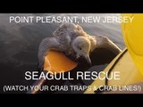 Injured Seagull Rescued By Kayakers at Point Pleasant, New Jersey