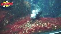 Pet Shark Escapes Aquarium and Chases kids! Feeding Pet Shark