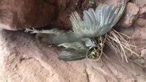 Keklik Avlamak İçin Kurulan 8 Tuzak Düzeneği Ele Geçirildi