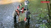 Léguer. Une pêche électrique pour compter les saumons