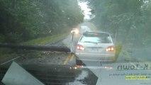 Cet automobiliste se prend un arbre en pleine tempête... La mort n'était pas loin