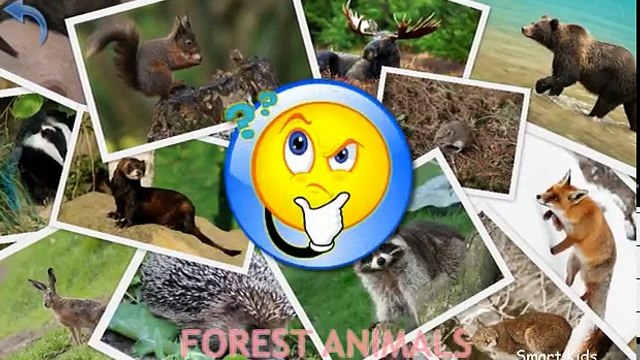 Animals for Kids | Forest Animals for Kids | Learn Animals | Animals in English
