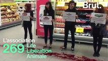 269 Life Libération Animale : qui sont les ultras de la protection animale ?