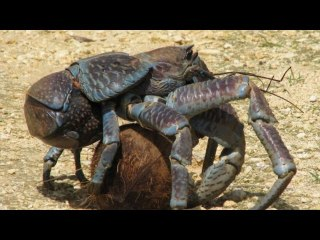 Top 5 Most Mysterious creatures on our planet