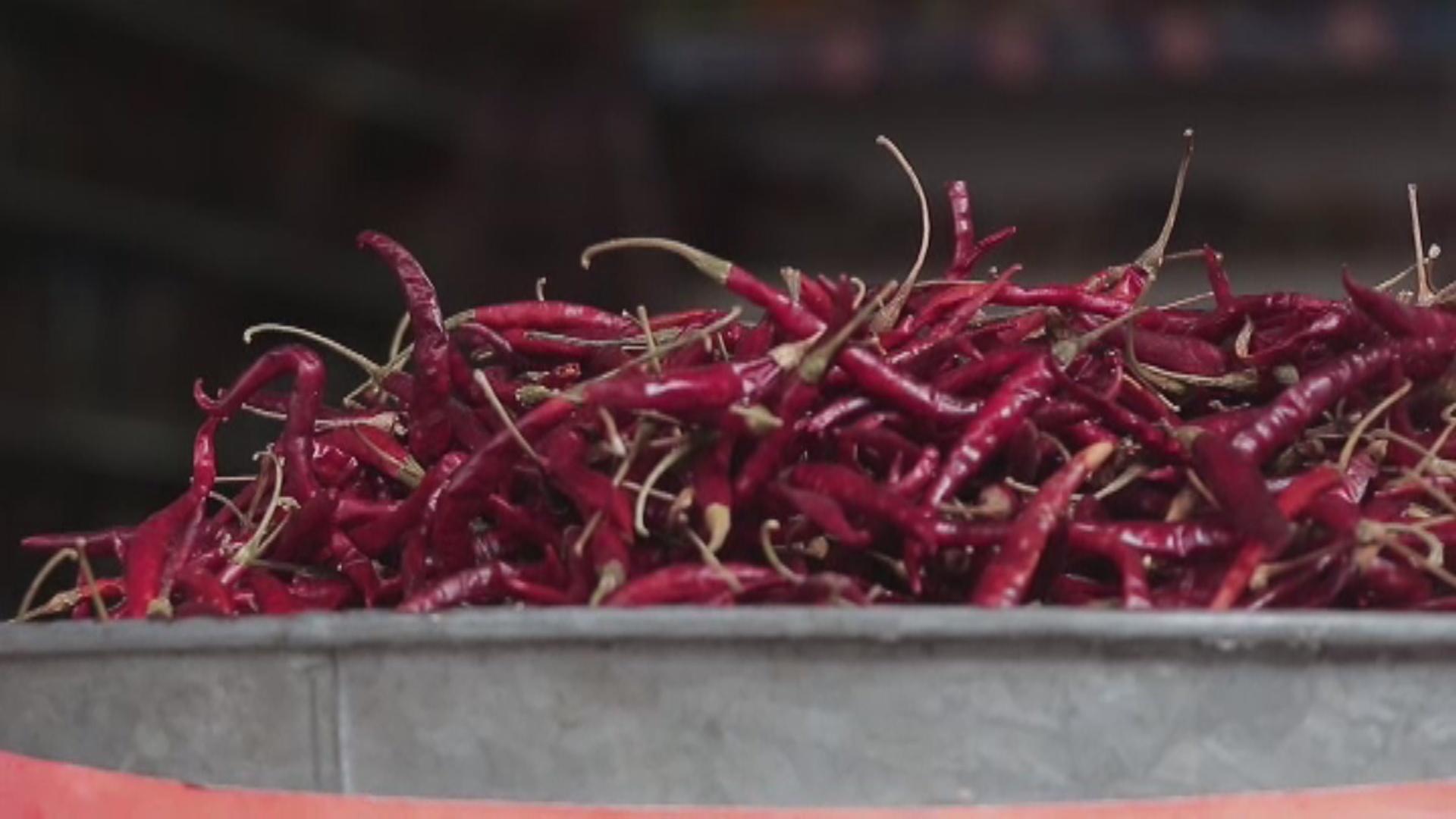 Chile de árbol: el ingrediente que da identidad y sustento a familias mexicanas