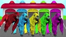 Nouveau les couleurs avec capitaine Amérique gorille et homme de fer vidéo pour enfants
