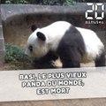 Basi, la doyenne des pandas, est morte à l'âge de 37 ans