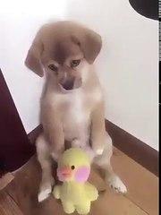 La adorable reacción de un perro a un tierno castigo