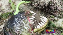 ANGLER FISH ATTACKS GIRL ON BEACH Angler Fish Toys GIRL FIGHTS OFF ANGLERFISH ATTACK, Toy Freaks