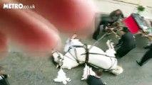 Un cheval qui tirait une calèche avec des mariés s'est effondré d'épuisement à cause de la chaleur