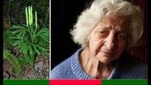CÂY THÔNG ĐẤT điều trị bệnh Alzheimer, phục hồi trí nhớ, sa sút trí tuệ