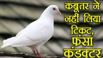 Tamil Nadu: A bus conductor stuck in Trouble for not giving ticket to a Pigeon, Know more |वनइंडिया