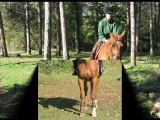 Montage cheval