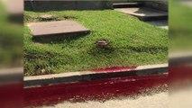 Fuite de litres de sang d'une maison de pompes funèbres en plein cimetière !