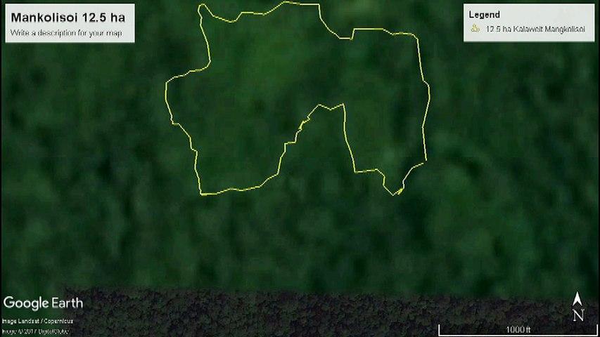 KALAWEIT MANGKOLISOI (Borneo) 12,5 ha to 16 ha