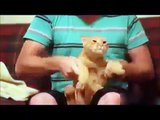 TOP Funny Cat and Dog Dancing and Singing in the World - Mkls