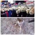 Chez Canada Goose chaque doudoune est cousue de souffrances