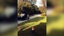 Ce chien est très content de retrouver son maître après 6 mois d'absence !