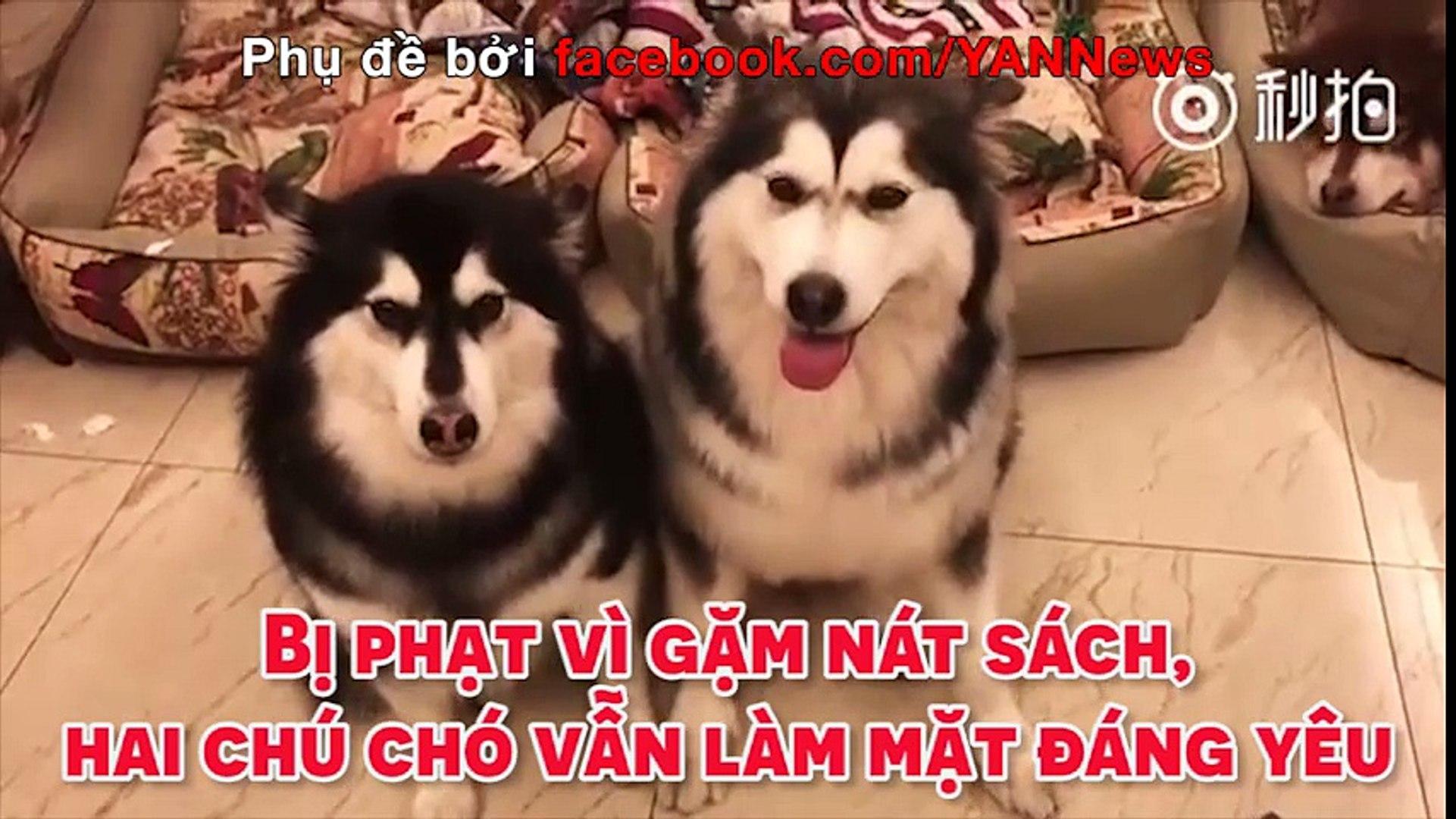Bị phạt vì gặm nát sách, hai chú chó vẫn làm mặt đáng yêu.