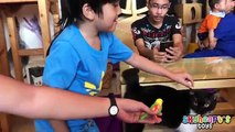 Toddler visits PET CAT STORES - Wild Bengal Cats Toys for kids playtime in zoo animals