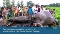 Elephants hit by speeding train in India   elephant in india