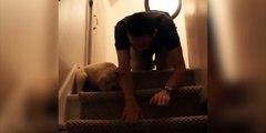 Un homme apprend à son chiot à descendre les escaliers !