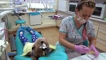 Алиса лечит ЗУБИК ! Алиса идёт на прием к стоматологу и ПОЛУЧАЕТ СЮРПРИЗЫ !