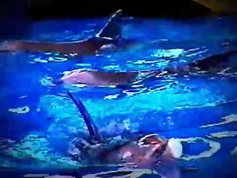 Incredible Dolphin Tricks (Best Tricks)
