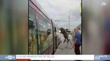 Montpellier: il monte à cheval dans le tramway - ZAPPING ACTU HEBDO DU 23/09/2017